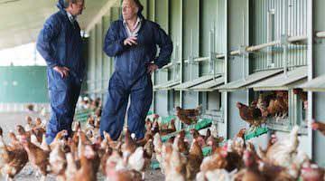 free range egg producers